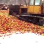 В правительстве РФ заговорили о намерении прекратить уничтожение санкционных продуктов